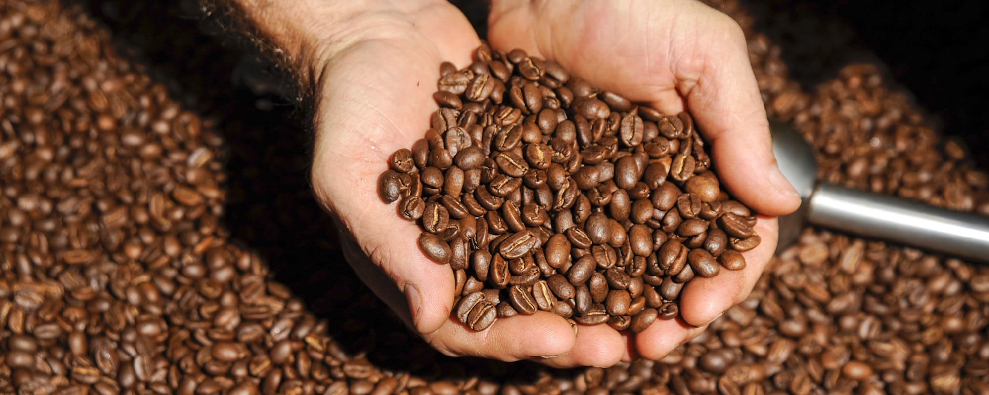 The Buzz in Spartanburg: Coffee Culture