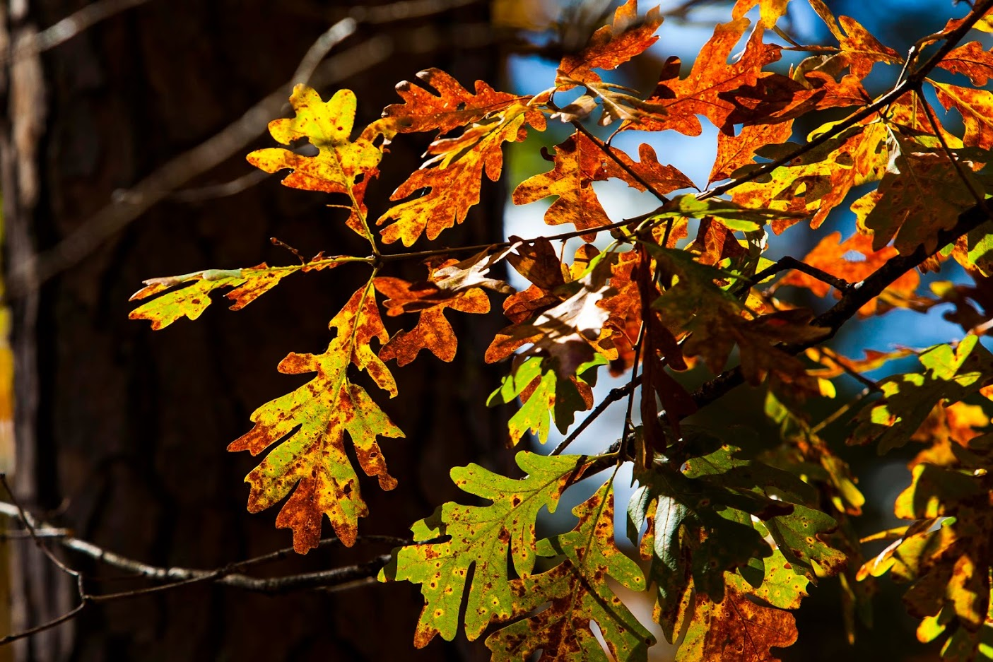 Up Close with Spartanburg's Fall Foliage